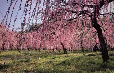 2019年2月名古屋の絶対おすすめイベント20選【 デートや子供向けのイベントも】