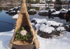 寒を遊ぶ 徳川園の冬牡丹
