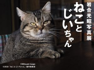 岩合光昭写真展「ねことじいちゃん」