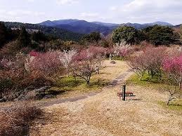 八木山花木園の梅