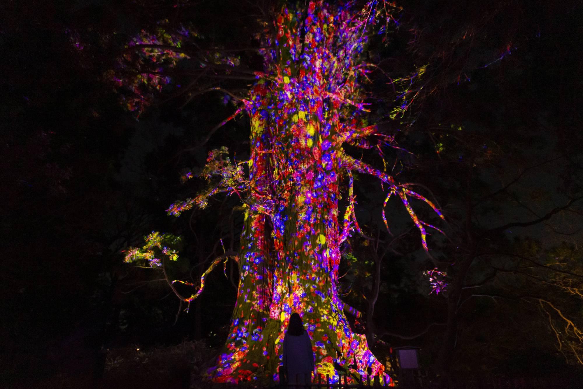 チームラボ 偕楽園 光の祭