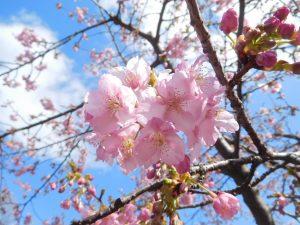 東山動植物園 春まつり