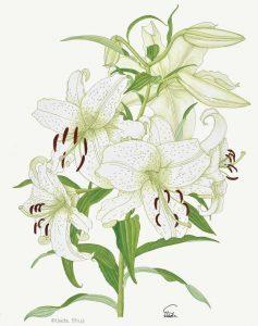 私の植物画展