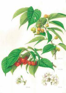 第25回福岡市植物園 植物画コンクール入賞作品展