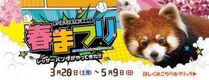 東山動植物園 春祭り