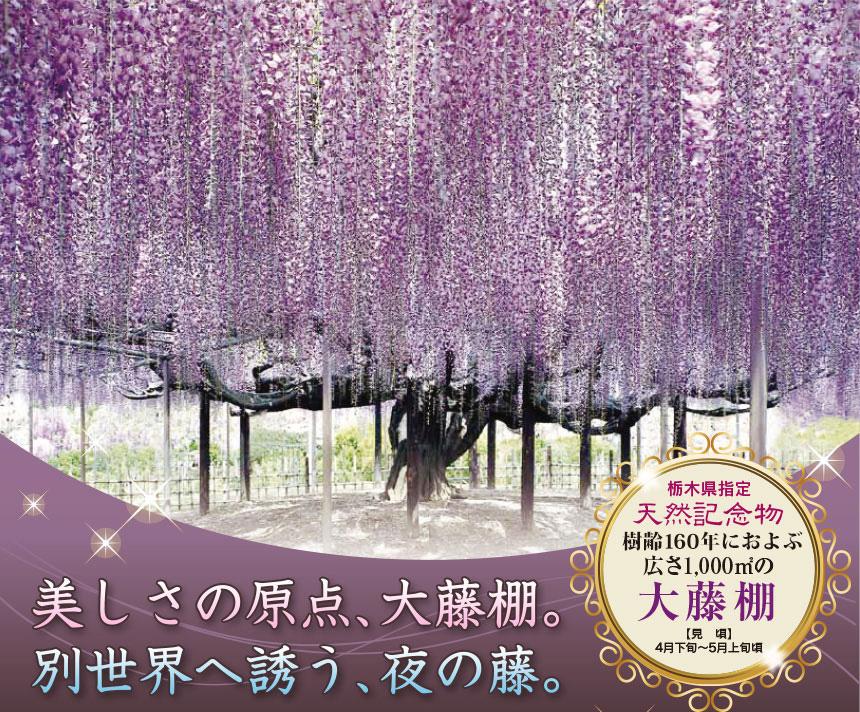 ふじのはな物語 大藤まつり2021