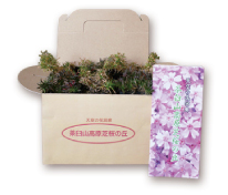 2021茶臼山高原「芝桜まつり」