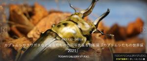 カブトムシやクワガタなど昆虫たちの合同写真展&物販展「カブトムシたちの世界展2021」