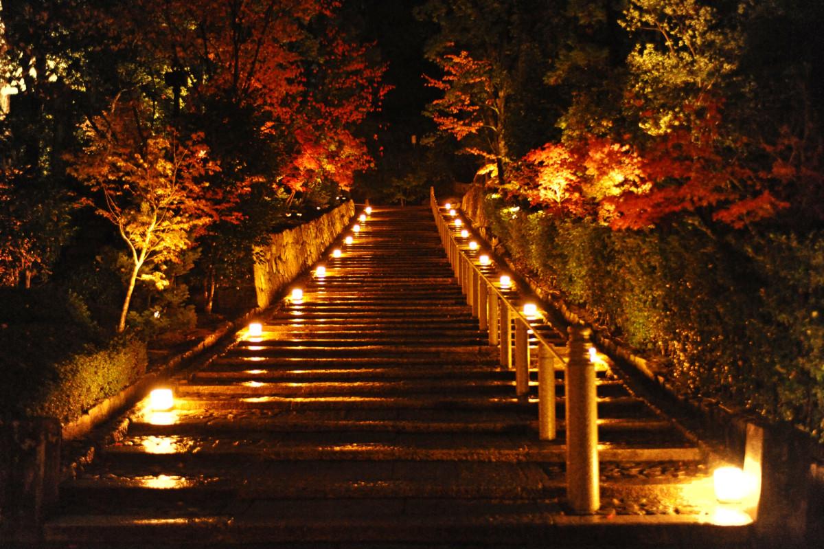 知恩院秋のライトアップ2021