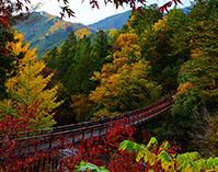 ~秋川渓谷~都心から約60分の大自然で紅葉めぐり